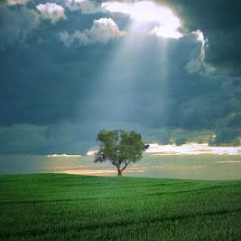 Притча. Мир глазами человека. Наши страхи. Дерево. Реальность.