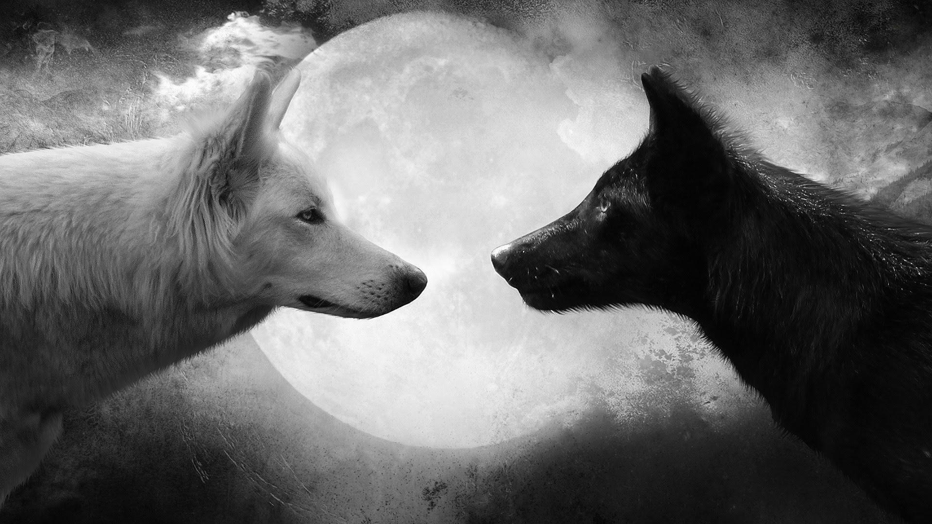 Два волка черный и белый