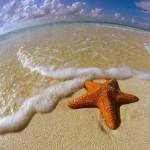 Спасти одну звезду. Что могут изменить попытки одного человека.