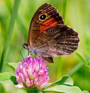Притча. Бабочка. Притча про бабочку. Все в твоих руках.