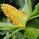 Лучшие зерна. Секрет хорошего урожая