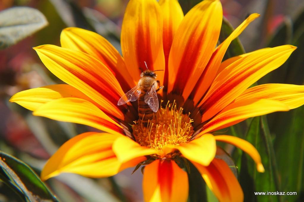 притча Муха и пчела