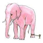 Почему слоны подчиняются верёвке. Люди и слоны.