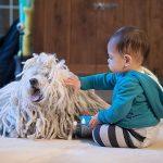 Легенда о том, как собака Марка Цукерберга помогла купить WhatsApp