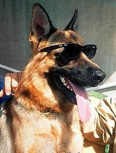 Легенда о самой богатой собаке. Гюнтер IV